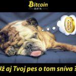Říjnová bitcoinová soutěž: Domácí mazlíček vám může vyhrát až 100 euro (2500 korun)