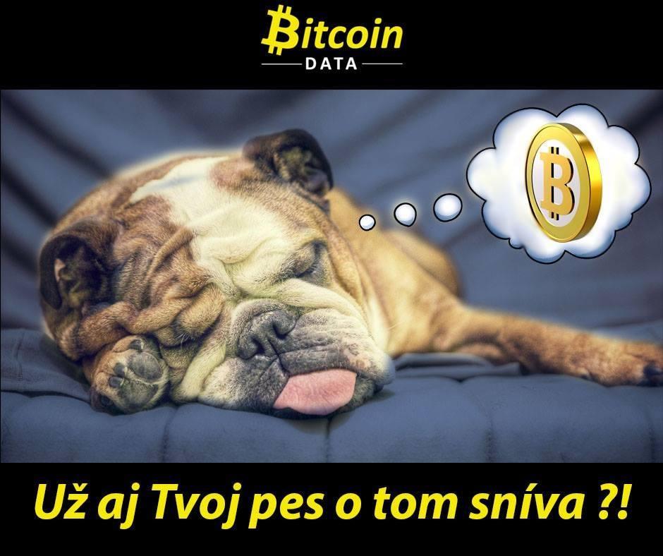 Bitcoin: Už i vás pes o tom sní